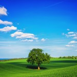 natural-green-wallpaper-4